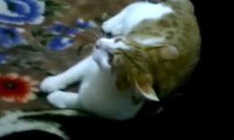 最近盛传的猫和狗能摸的部位